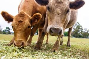 Farmyard Tasks