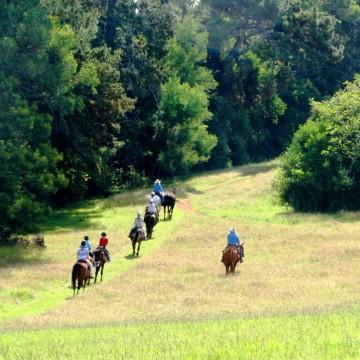 A Natural Horsemanship Experience