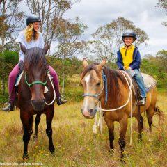 Horsemanship Workshops
